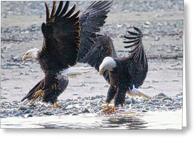 Two Eagles Greeting Card by Clarence Alford