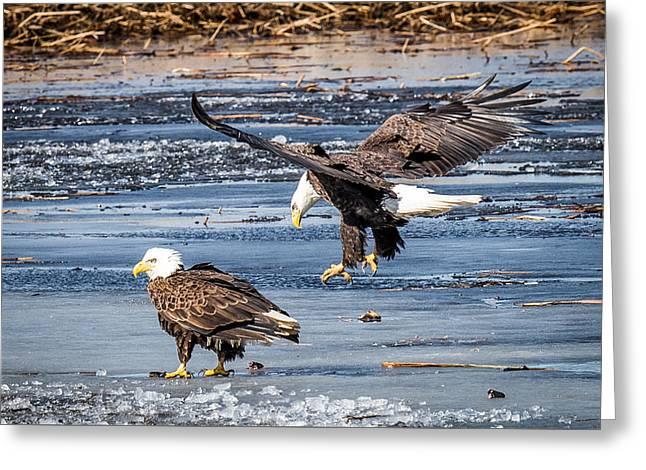 Two Eagles Greeting Card by Paul Freidlund