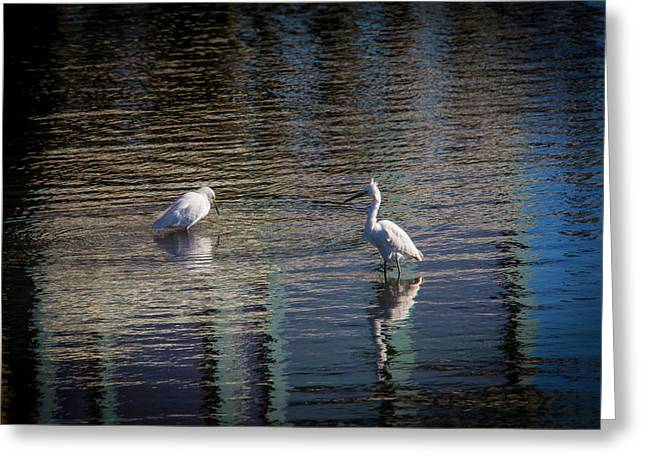 Two Egret's Fishing Greeting Card