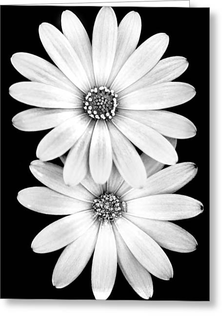 Two Flowers Greeting Card by Az Jackson