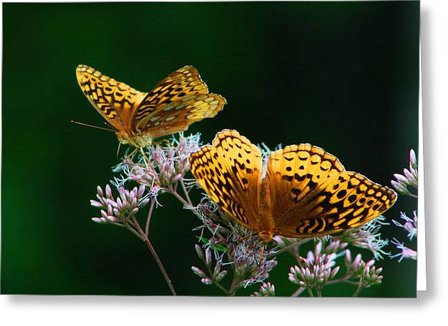 Two Fritillaries Greeting Card by Kathryn Meyer