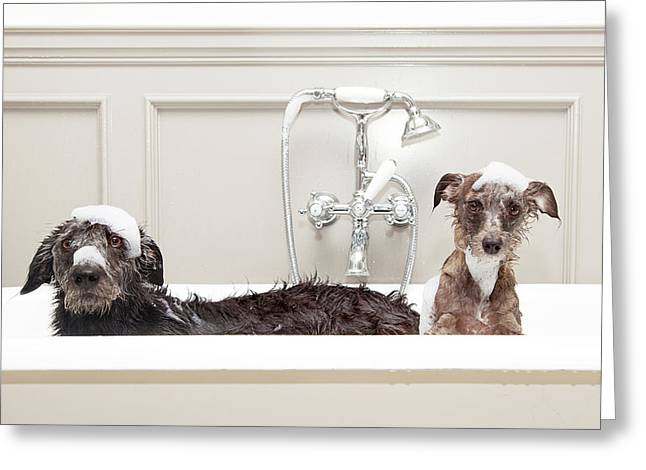 Two Funny Wet Dogs In Bathtub Greeting Card by Susan Schmitz