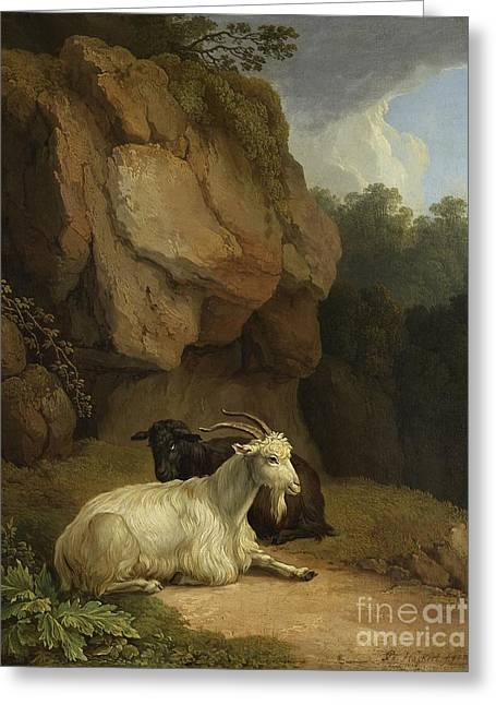 Two Goats On A Rocky Ledge Greeting Card