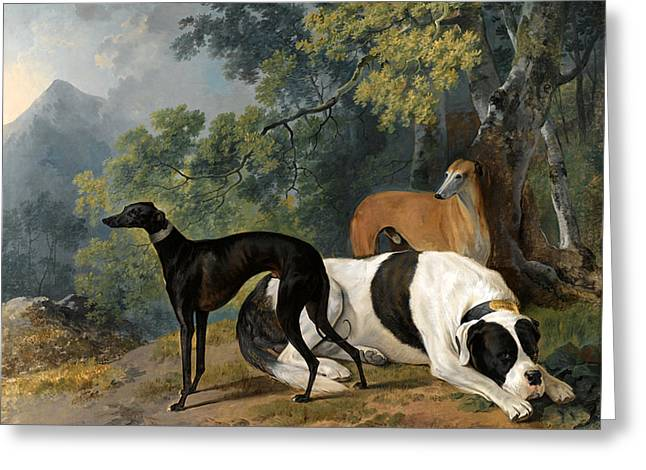 Two Greyhounds And A Mastif Belonging To The Duke Of Hamilton Greeting Card by Sawrey Gilpin