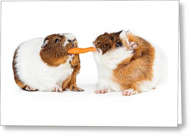 Two Guinea Pigs Sharing Carrot Greeting Card