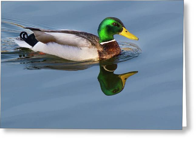 Two Headed Duck Greeting Card