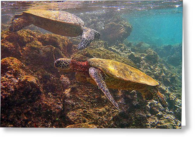 Two Honu On The Reef Greeting Card