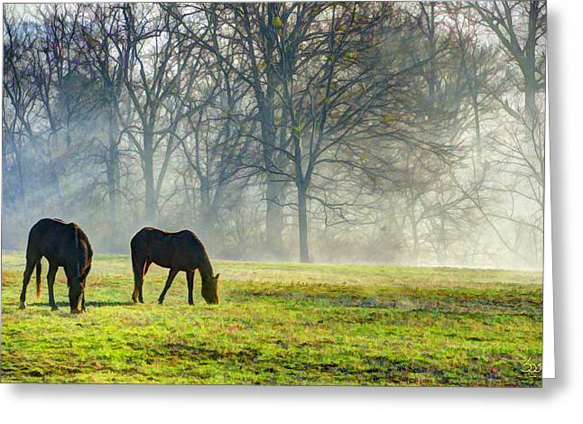 Two Horse Morning Greeting Card