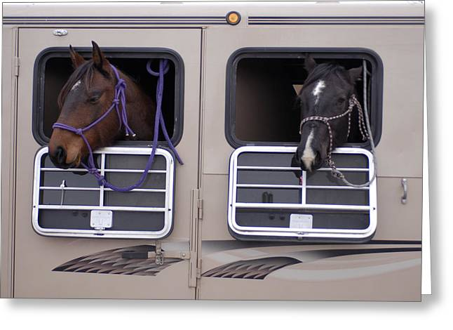Two Horses Are Ready To Travel Greeting Card by Joel Sartore