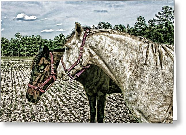 Two Horses In A Field Greeting Card