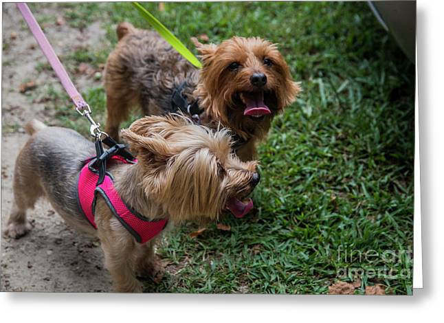 Two Hot Dogs 11582 Greeting Card by Doug Berry