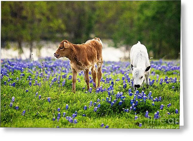 Two In Blue Greeting Card by Katya Horner