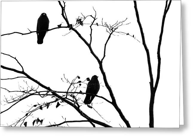 Two Jackdaws - Waiting Greeting Card by Philip Openshaw
