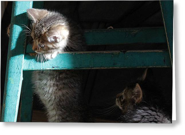 Greeting Card featuring the photograph Two Kittens With Turquoise Chair by Doris Potter