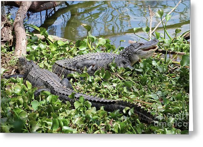 Two Lakeside Gators Greeting Card