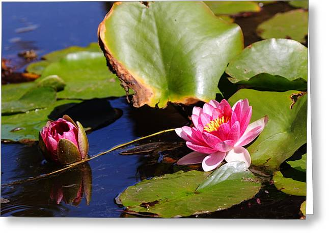 Greeting Card featuring the photograph Two Lilies by Richard Patmore