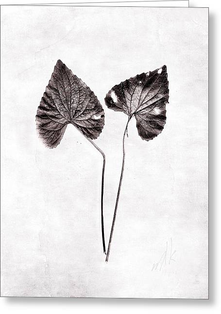 Two Little Violet Leaves Greeting Card by Louise Kumpf