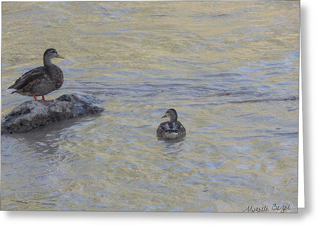 Two Mallard Ducks Greeting Card
