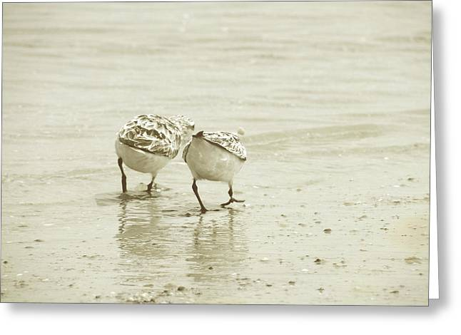 Two Of A Kind Greeting Card by JAMART Photography