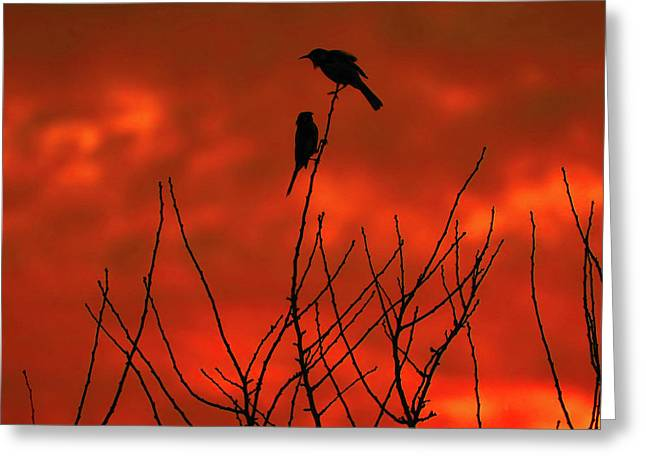 Greeting Card featuring the photograph Two On A Twig by Mark Blauhoefer