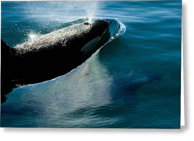 Two Orca Whales Greeting Card