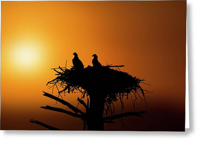 Two Osprey Chicks Waiting For Evening Snack Greeting Card
