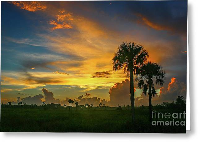 Two Palm Silhouette Sunrise Greeting Card