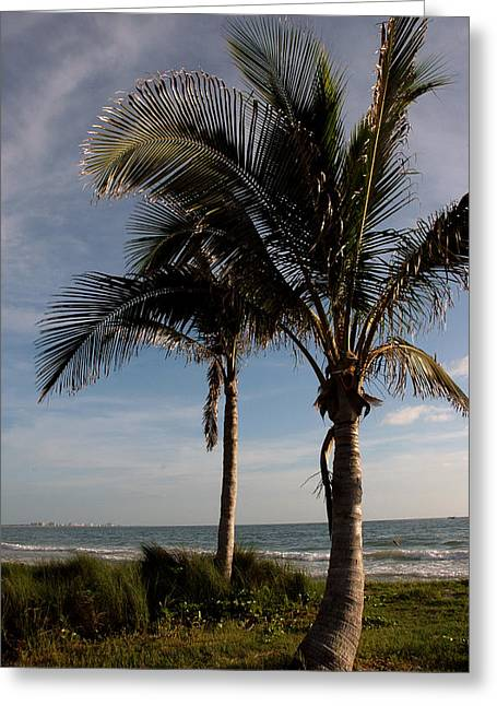 Two Palms And The Gulf Of Mexico Greeting Card by Susanne Van Hulst