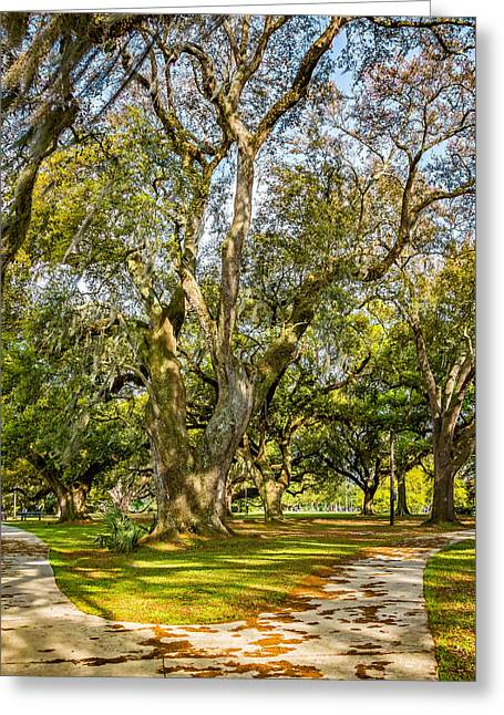 Two Paths Diverged In A Live Oak Wood 2 Greeting Card by Steve Harrington