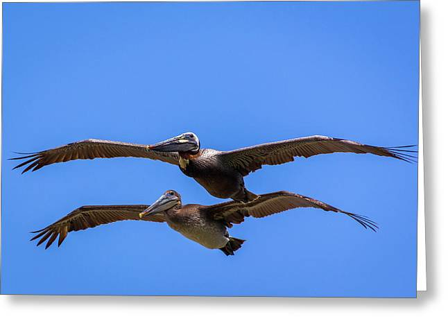 Greeting Card featuring the photograph Two Pelicans Over The Beach by Randy Bayne