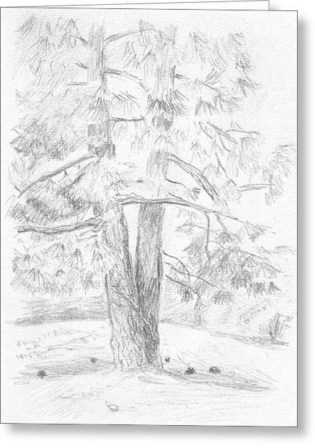 Two Pine Trees Greeting Card