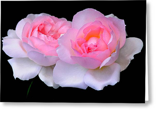 Two Pink Roses Greeting Card by JoAnn Lense