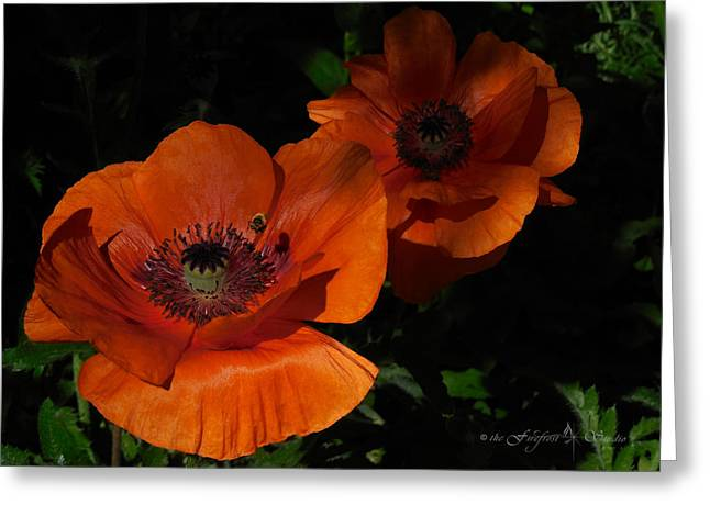 Two Poppies  And A Bee Greeting Card