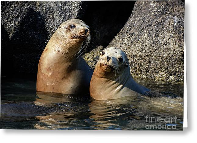 Two Quiet Sea Lions Greeting Card