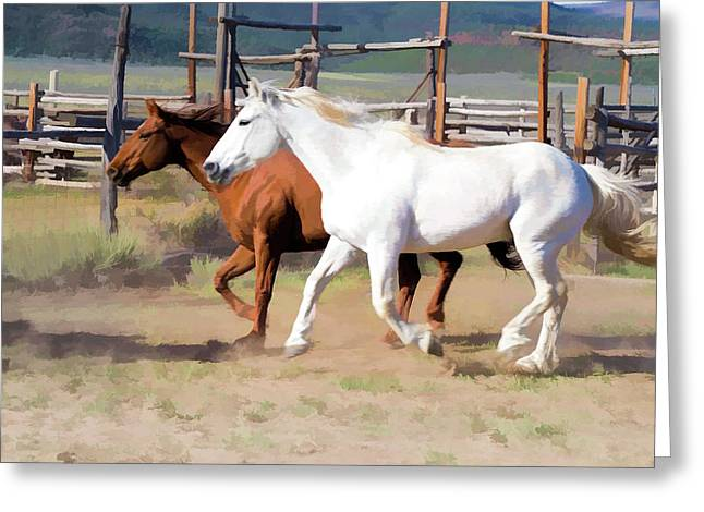 Two Ranch Horses Galloping Into The Corrals Greeting Card