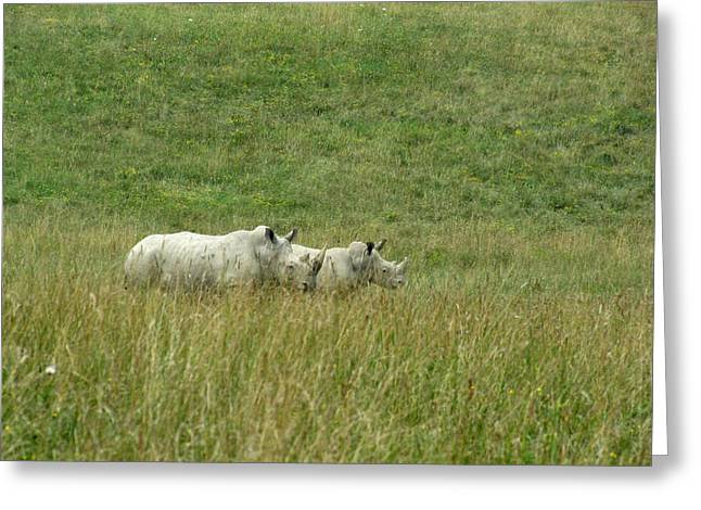 Two Rhino In The Grass Greeting Card by George Jones