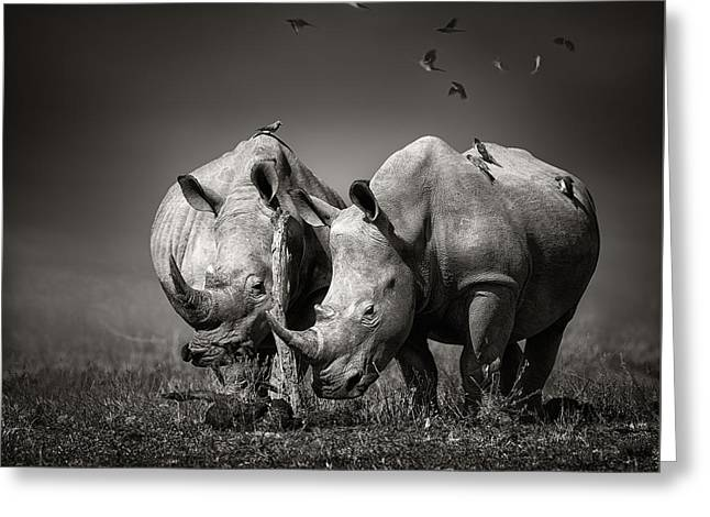 Two Rhinoceros With Birds In Bw Greeting Card by Johan Swanepoel