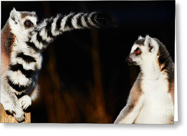 Two Ring-tailed Lemurs Greeting Card by Nick Biemans