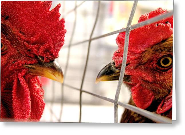 Two Roosters Greeting Card by Mark Stevenson