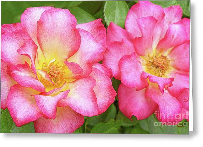 Two Roses-rainbow Sorbet Greeting Card