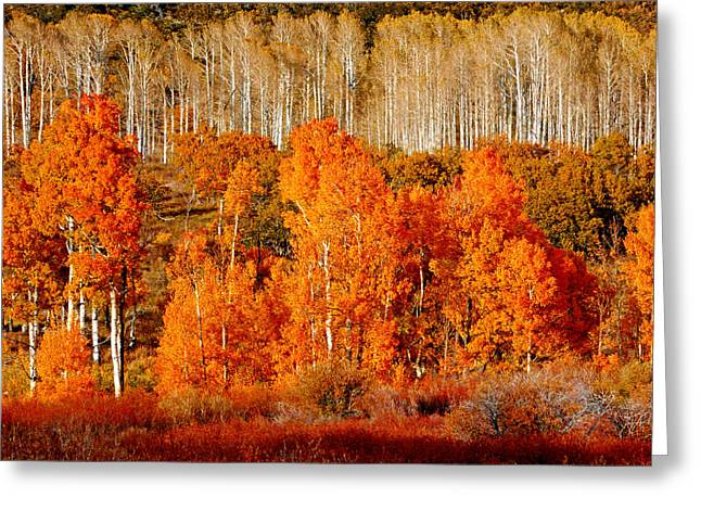 Two Rows Of Aspen Greeting Card by Marcia Socolik