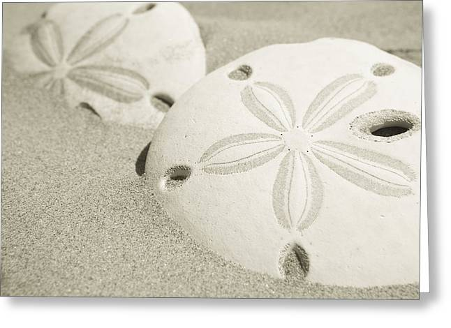 Two Sand Dollars Rest In The Sand Greeting Card by Ralph Lee Hopkins