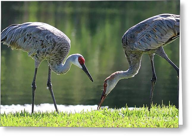 Two Sandhills By The Water Greeting Card by Carol Groenen