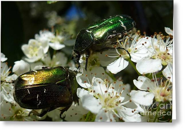 Greeting Card featuring the photograph Two Scarabs Metallic Green by Jean Bernard Roussilhe