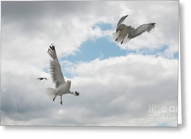 Two Seagull Flying In The Sky Greeting Card