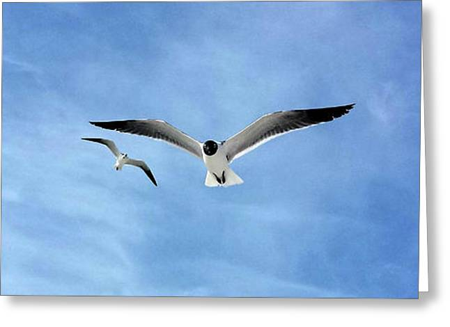 Two Seagulls Against A Blue Sky Greeting Card