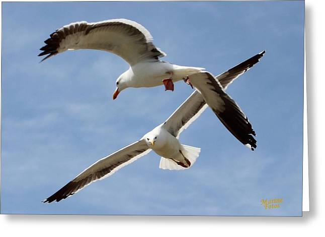 Two Seagulls Almost Collide  Greeting Card