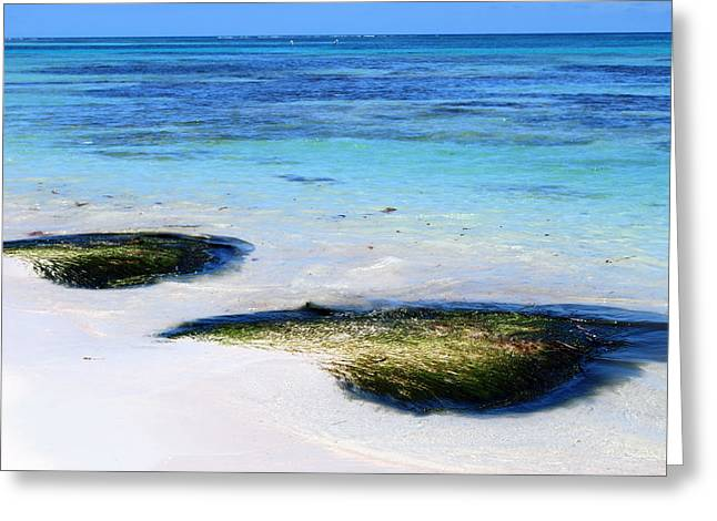 Two Seaweed Mounds On Punta Cana Resort Beach Greeting Card
