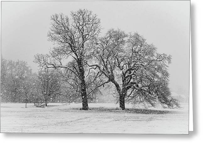 Greeting Card featuring the photograph Two Sister Trees by Louis Dallara