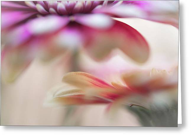 Greeting Card featuring the photograph Two Souls 1. Macro Gerbera by Jenny Rainbow